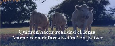 Banner: Carne cero deforestación