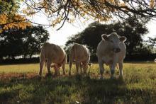 Nota: Carne cero deforestación