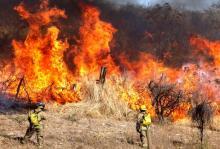 Nota: Incendios en Jalisco